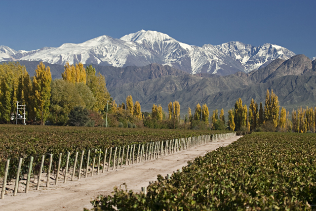 andean_mountain_and_vineyards1-_photo_gallery